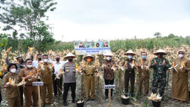 Photo of Ketapang Mampu Kurangi Beban Masyarakat Tapsel Terdampak Covid-19