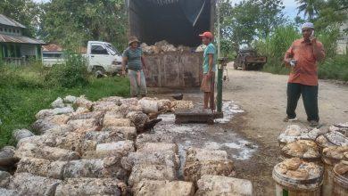 Photo of Hore… Harga Getah Karet di Madina Tembus Rp11.000/kg